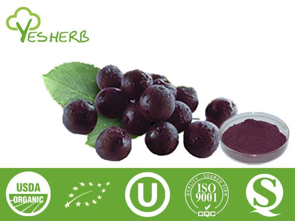 Maqui Berry Powder Manufacturer Juice Powder Xian Yuensun